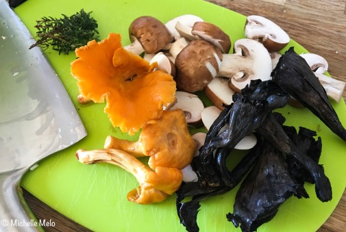 cogumelos-1-de-1
